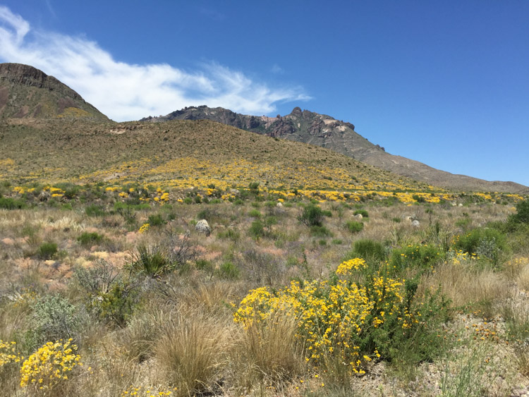 Big Bend-One Little Minute Blog-17