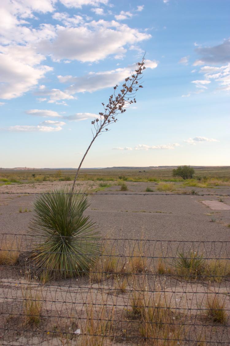 Marfa, TX-One Little Minute Blog-68