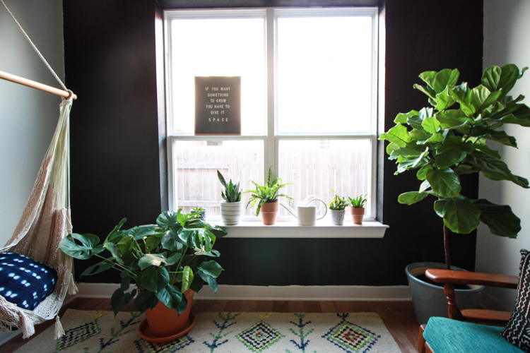 Houseplants 101 - One Little Minute Blog-11