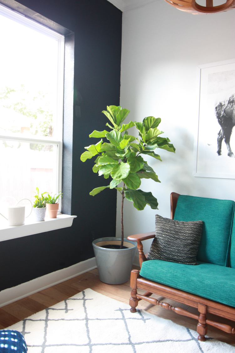Houseplants 101 - One Little Minute Blog-4
