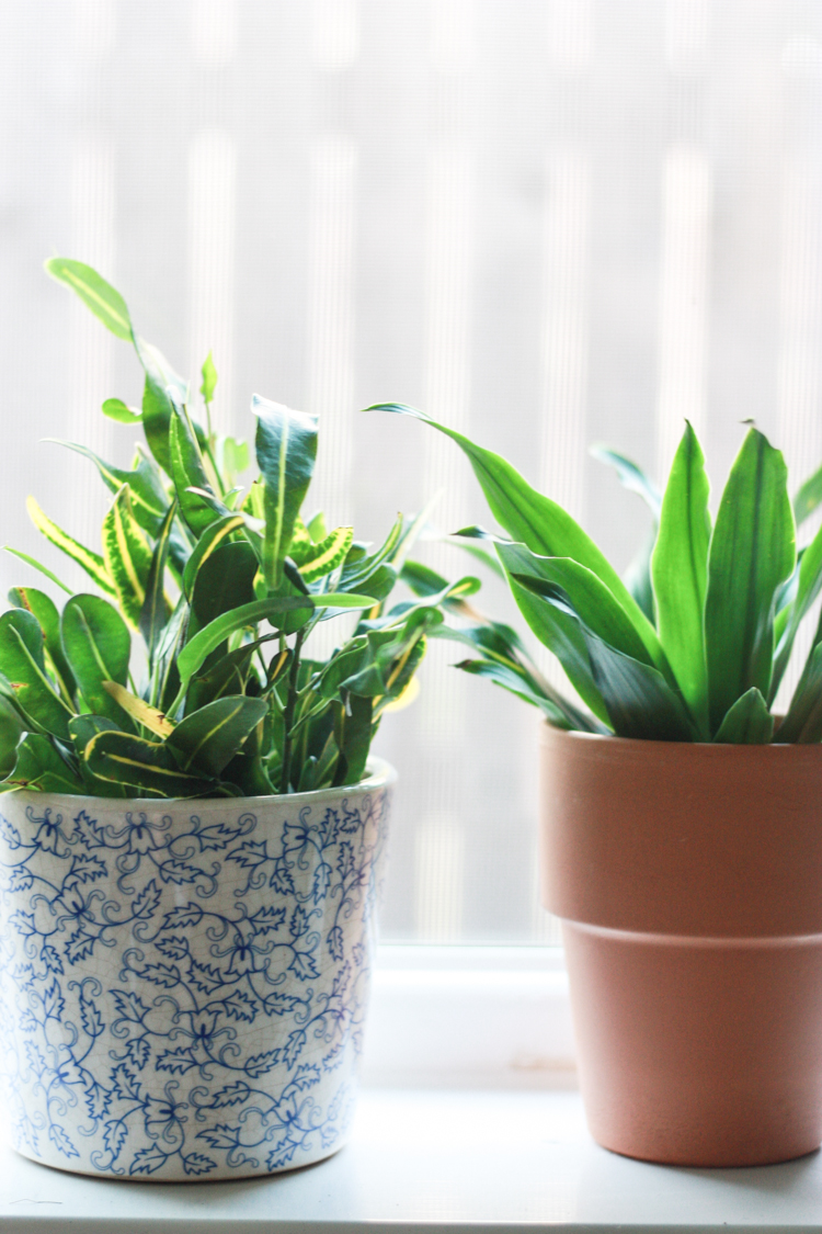Houseplants 101 - One Little Minute Blog-6