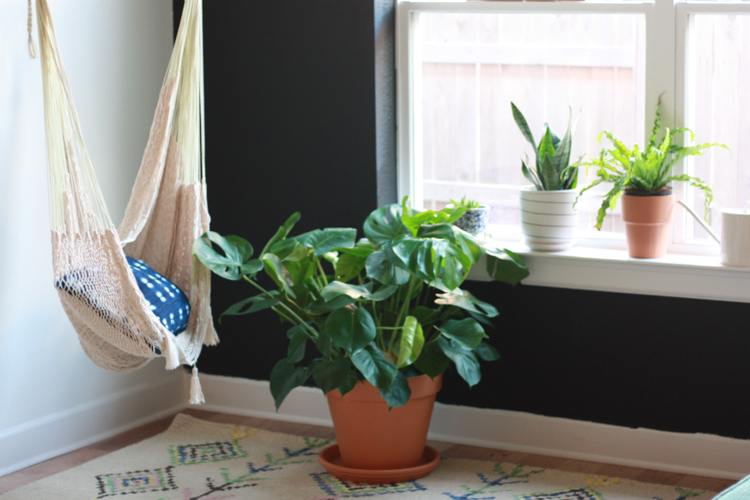 Houseplants 101 - One Little Minute Blog-7