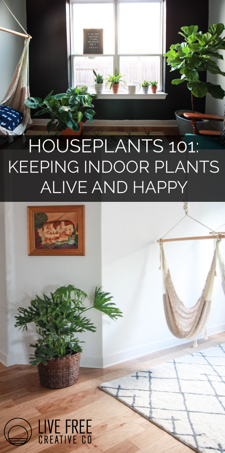 Keeping Indoor Plants Alive and Happy | Live Free Creative Co