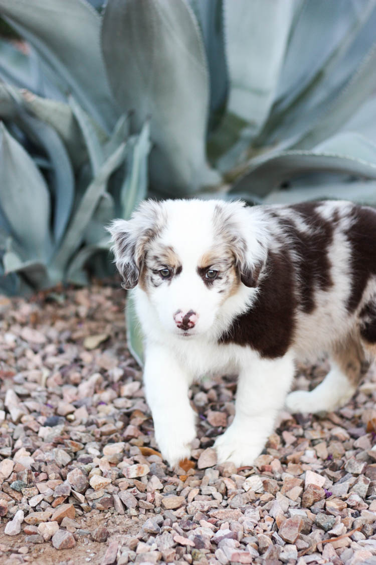 The Best Time To Get A Dog- One Little Minute Blog-1