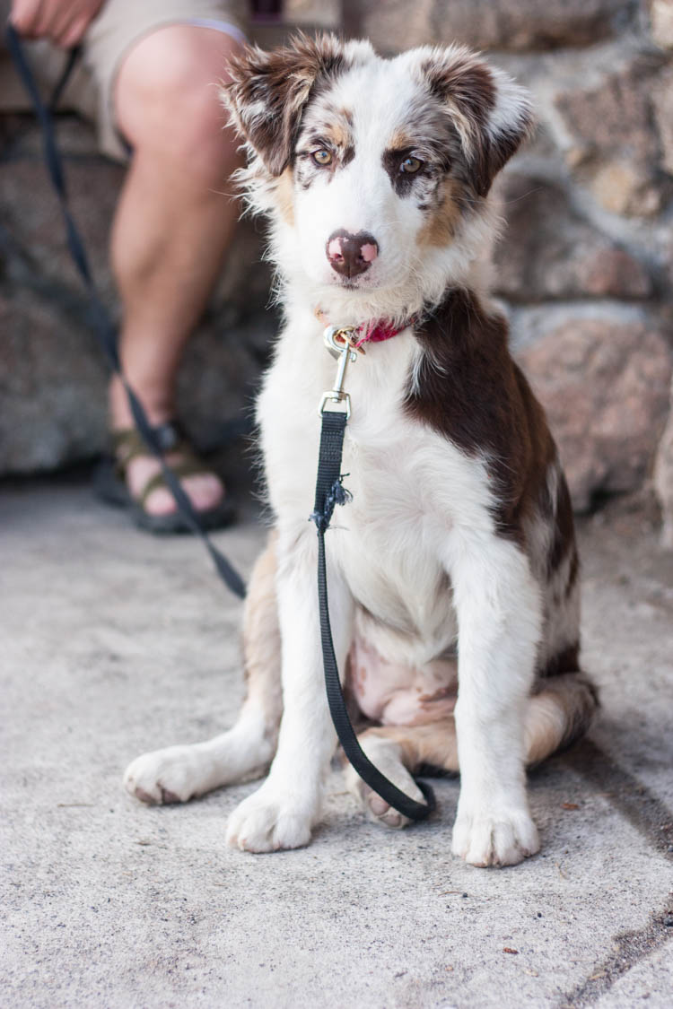 The Best Time To Get A Dog- One Little Minute Blog-11