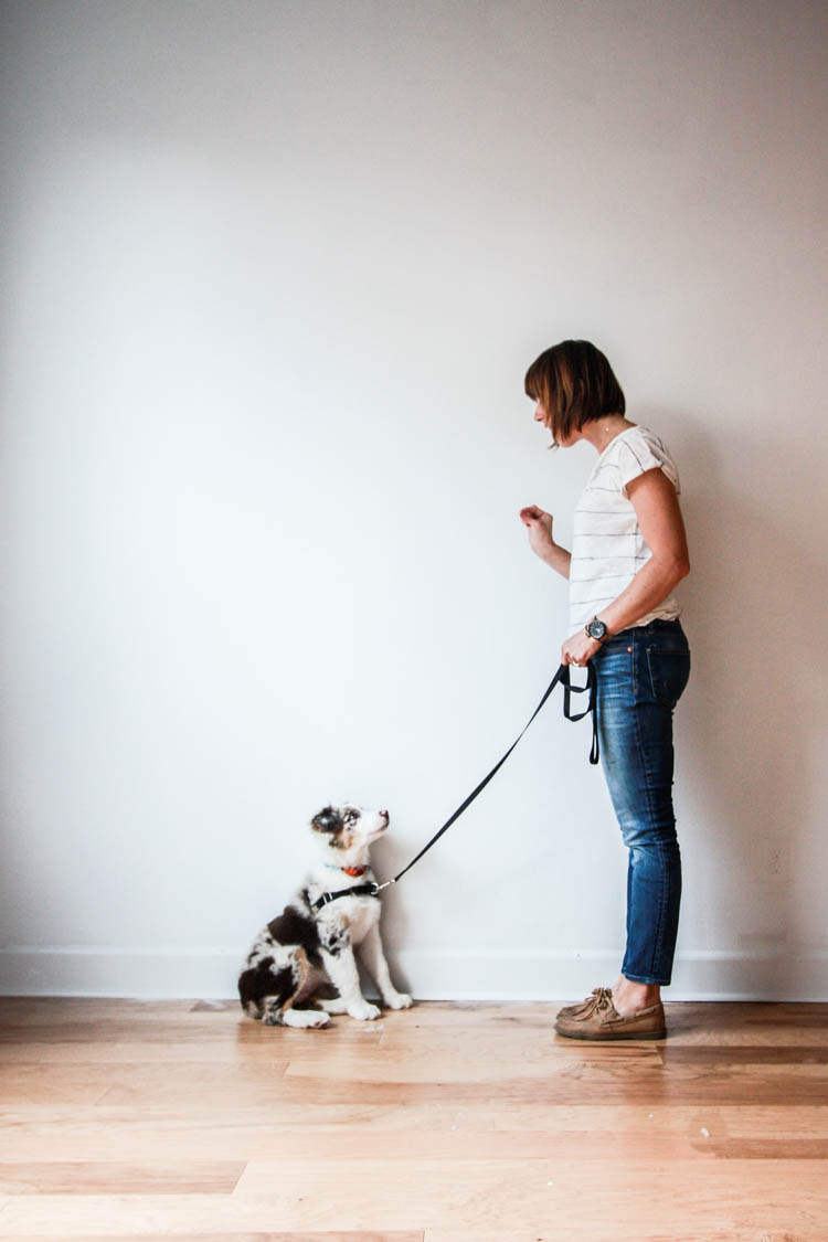 The Best Time To Get A Dog- One Little Minute Blog-9